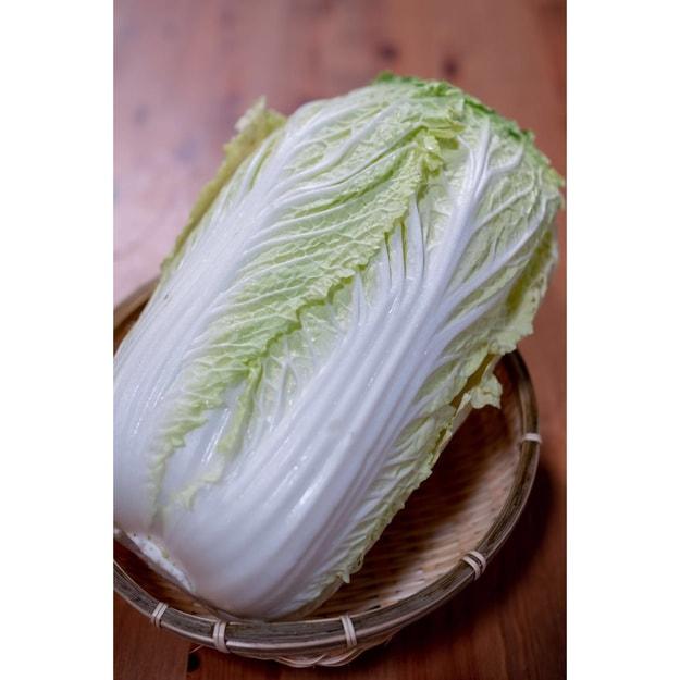Product Detail - FULL SEASON Napa Cabbage (1lb.) - image 0