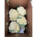 四季蔬果 台湾松花菜 (1.5磅)