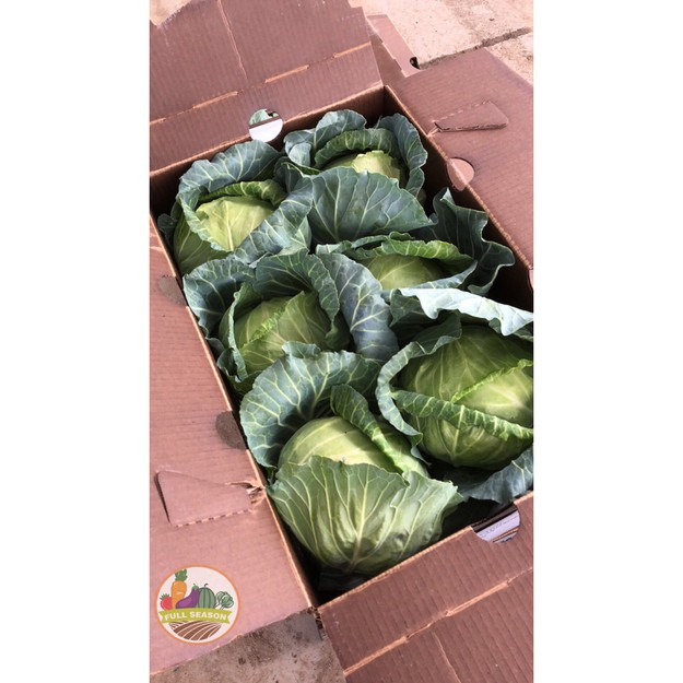 Product Detail - FULL SEASON TW Cabbage (1 count 3-4lb.) - image 0