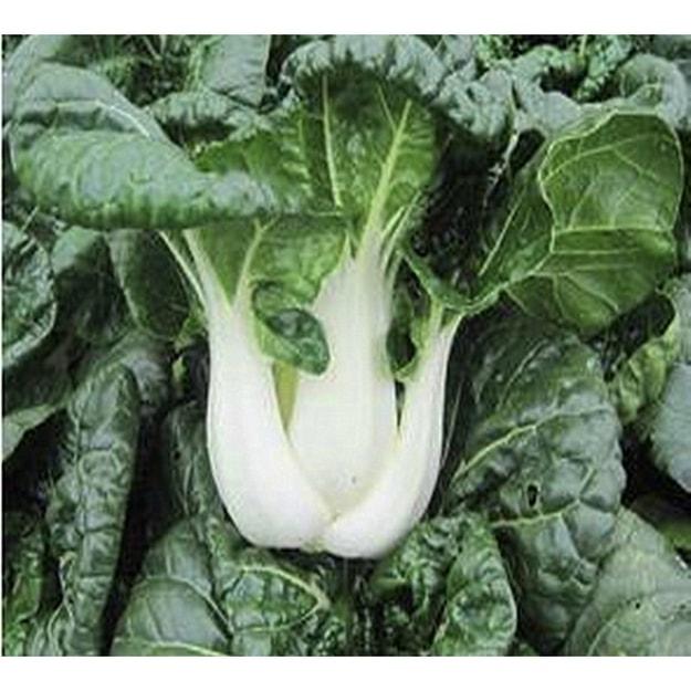 商品详情 - 短白菜2磅 - image  0