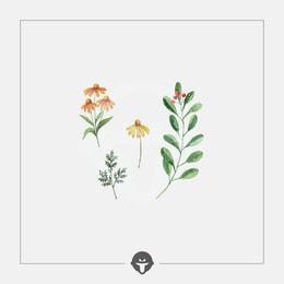 @BECOME Original Tattoo Stickers Spring breeze stroking Three Piece