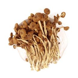 MushroomStorm Premium Dried Cyclocybe Aegerita Mushrooms 200g