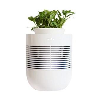 GANGNAM SHOP Healing Pot Botanical Humidifier