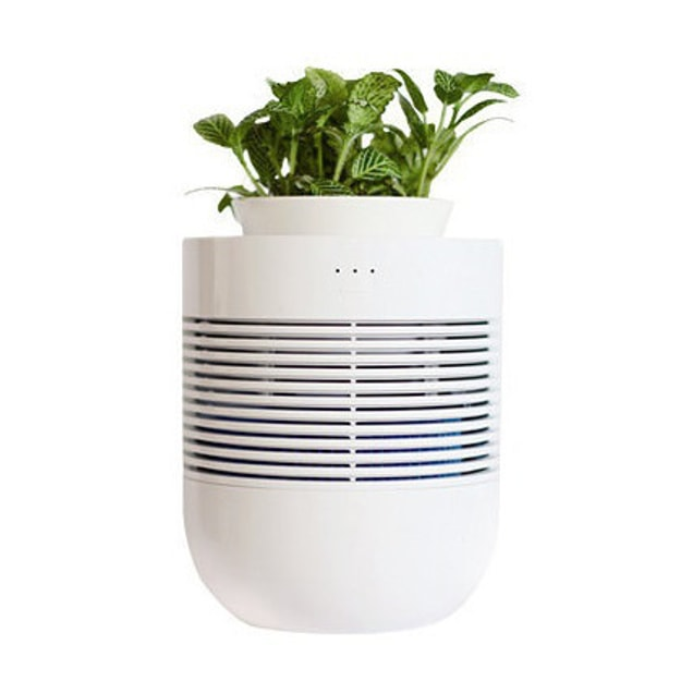 Product Detail - GANGNAM SHOP Healing Pot Botanical Humidifier - image 0