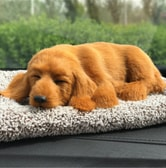 LORDUPHOLD Car Interior Decoration Dog Decor Car Ornament ABS Plush Dogs Shake Head Simulation Sleeping Dachshund Dog 1