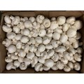四季蔬果 白蘑菇 (1磅)