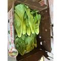 四季蔬果 小芥菜 (1磅)