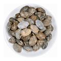 活海瓜子/花蛤1.8-2.2磅