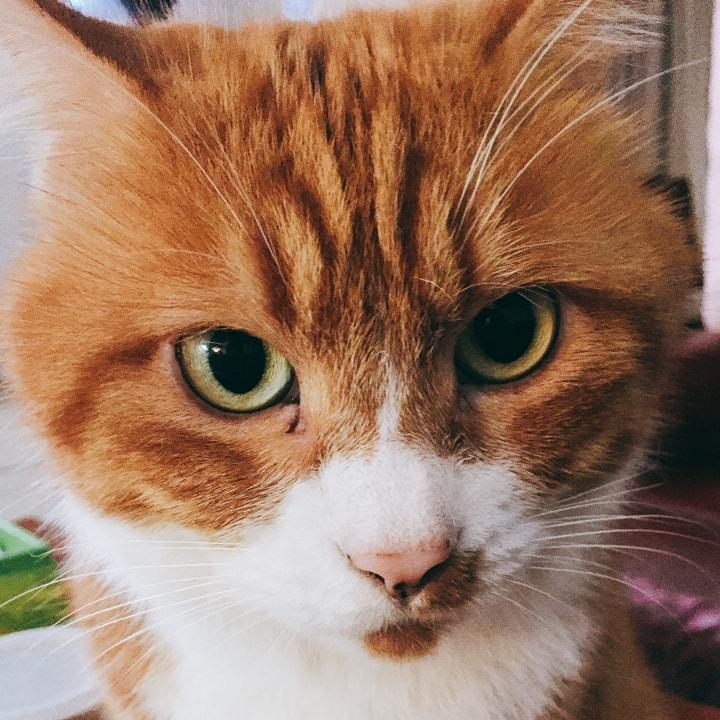 阿兹猫头像