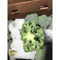 四季蔬果 西兰花 (1-1.2磅)