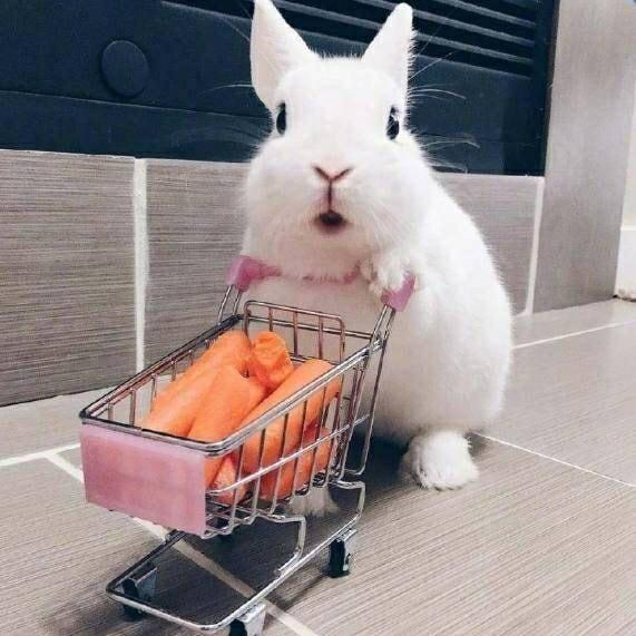 萝北不是萝卜